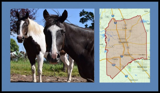 Horse Properties for Sale San Joaquin County